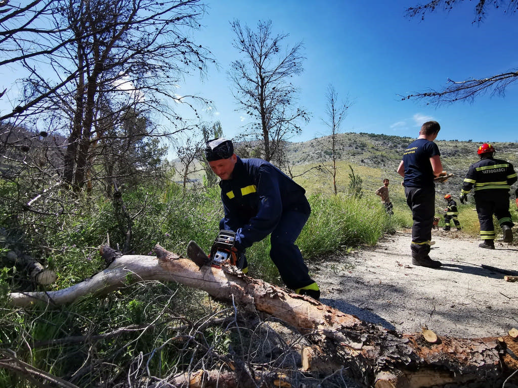 Čišćenje izgorenih stabala sa izvora Žrnovnice